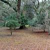 Hofwyl-Broadfield Plantation 02-05-10 - Various Images - Camellias