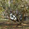 Georgia State Parks - Hofwyl-Broadfield Plantation - Historic Sites Hosts - Volunteers 03-23-11<br /> Tree and Area cleaned by Volunteer Hosts