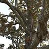 Georgia State Parks - Hofwyl-Broadfield Plantation - Historic Sites Hosts - Volunteers 03-23-11<br /> Magnolia after Lightning Strike but going strong