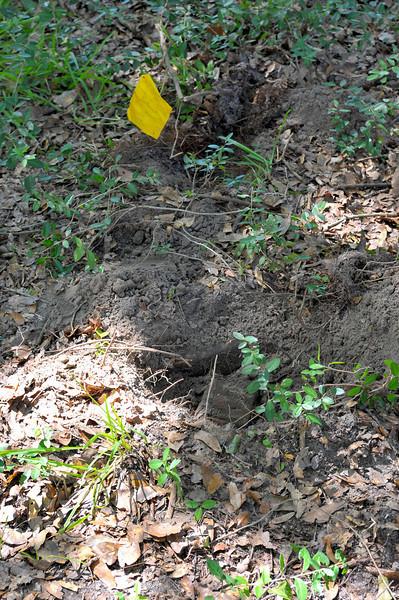 Hofwyl Historic Garden 09-29-09 at the Hofwyl Plantation in Glynn County near Brunswick, Georgia