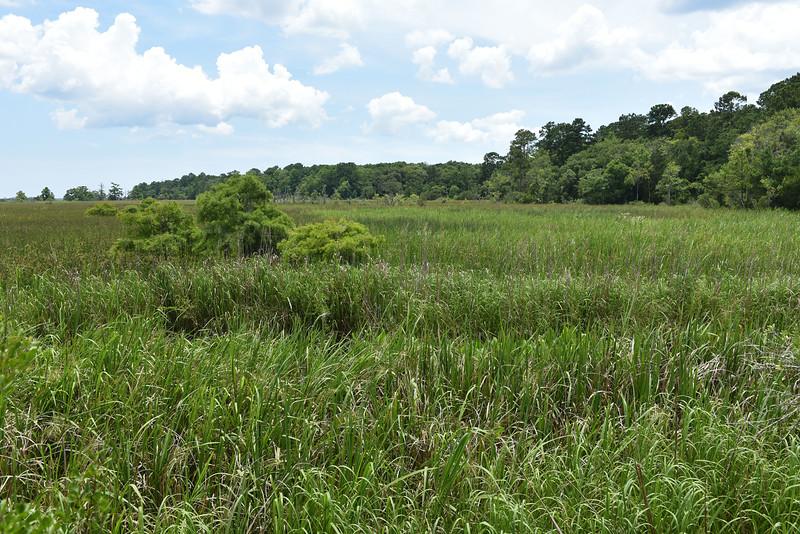 Hofwyl - Plantation Rice Culture Explained 06-06-15