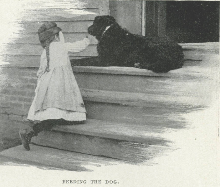 Holyoke Feeding the Dog