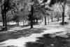 Holyoke M P Primary Picnic Grove