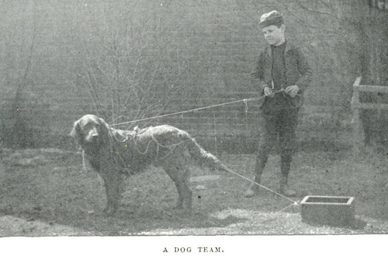 Holyoke A Dog Team