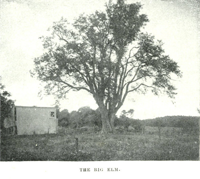 Holyoke The Big Elm