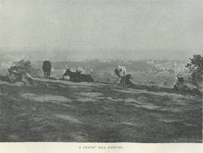 Holyoke Ctafts Hill Pasture
