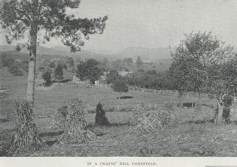 Holyoke Craft's Hill Cornfield