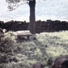 Myrtle Earth Farmyard Grave 1961