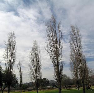 Jensen-Alvarado Ranch, Rubidoux.  Trees. 8 Feb 2007