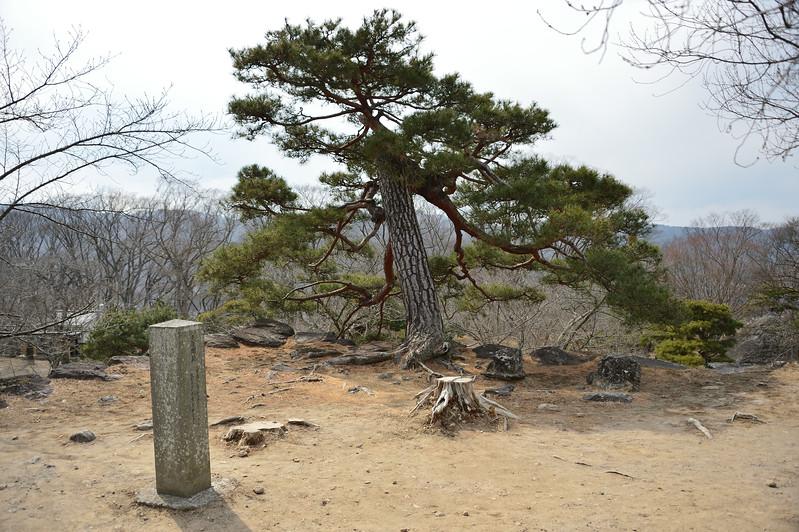 Pine tree on the keep