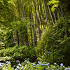 Bamboo forest and hydrangeas