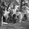 Shepards, sheep.