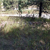 Some of the foundation of Deadwood Dick's cabin can still be seen at this site.