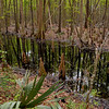 LeConte's Woodmanston Rice Plantation and Botanical Garden near Riceboro, Georgia 03/27/12