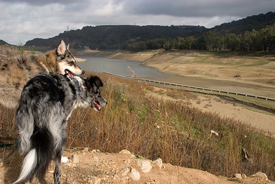 Tika and Boost look across the empty lake with the dam in the background.