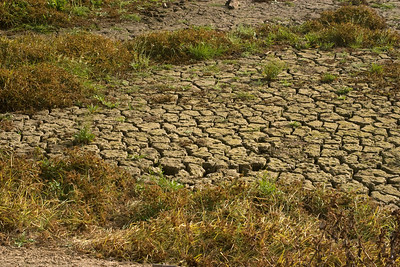 The adobe lakebed had dried enough that it had developed major cracks.