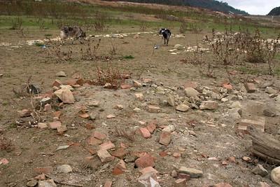 Lexington building debris explored by canines.