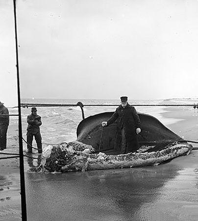 Whale. Long Island Beach,