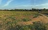 Lost Corner Farm