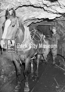 Horse working underground (Image: 2002-26-172, Kendall Webb Collection)