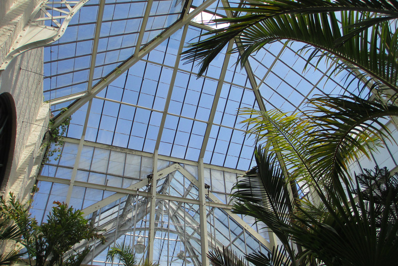 Looking up through the glass ceiling of the Conservancy...