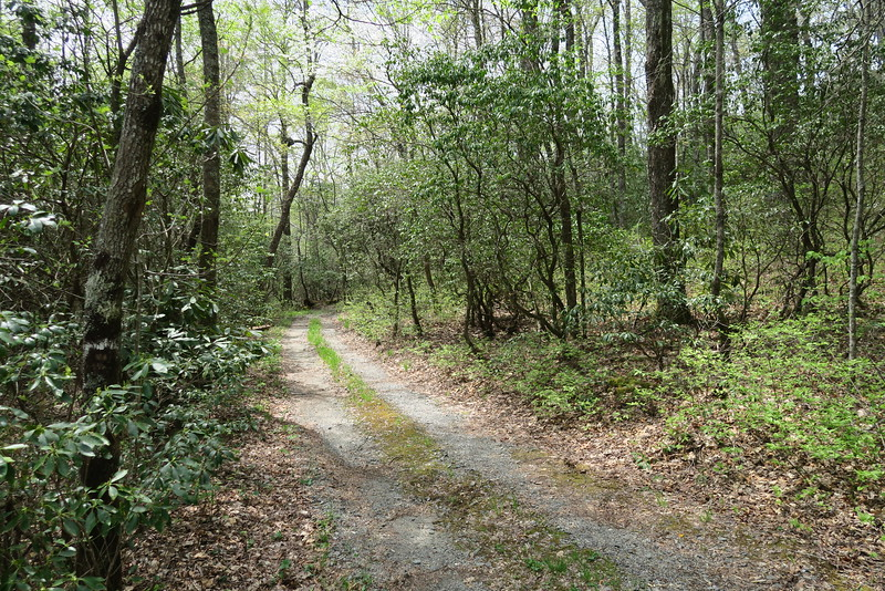 Biltmore Campus Trail -- Draw Road