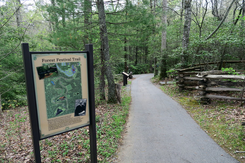 Forest Festival Trail