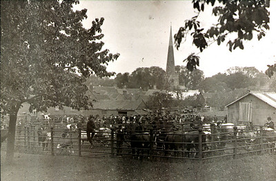 This was Newents cattle market day on the sight where a supermarket Budgens and Memorial hall now stands behind the market house.