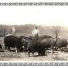10. Bud raised some BIG hogs!