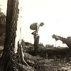 10. Dad climbing on a stump.