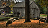 <center>Sheep Paddock  <br>No matter where I stood, that blasted tree was in the middle of the shot.  Unfortunately, the sheep wouldn't get any closer together, since that would have allowed me to at least crop the tree out of the center. <br><br>Old Sturbridge Village - 16 October, 2011<br>Rhode Island Brunch Bunch Meetup Group</center>