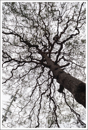 Looking up at the tree.  I love these twisty branches.