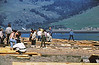 4*Mon, Jan 18, 1971<br /> People: volunteers<br /> Subject: building floating oil dam, fishing out birds<br /> Place: Bolinas Lagoon, Mt Tamalpaias in back<br /> Activity: <br /> Comments: nowdays, everything is done by government.