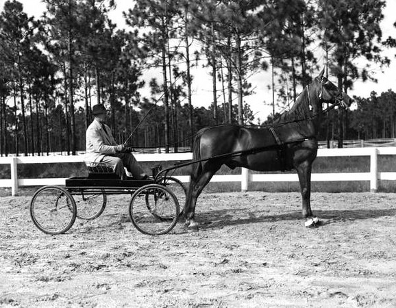 F.W. Truex and his horse, Red Eagle. Courtesy of the State Archives of Florida, Florida Memory, http://floridamemory.com/items/show/66909