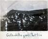 Port Erin Gulls on Green 1912