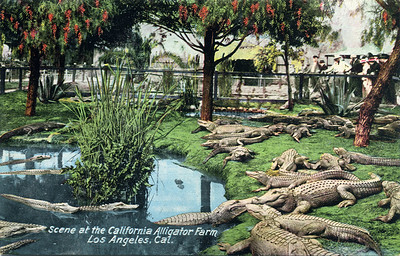 Scene at the Gator Farm