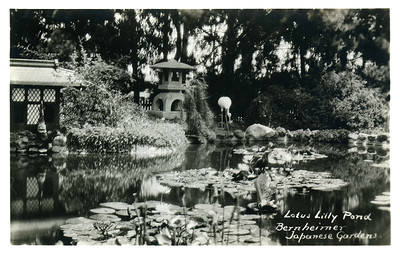 Bernheimer Lilly Pond