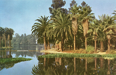 Still Lake in Echo Park