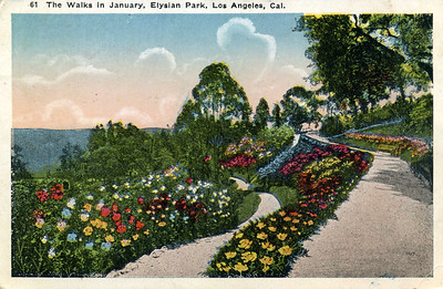 January Pathways in Elysian Park