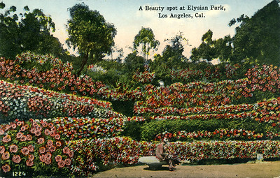 A Beauty Spot at Elysian Park