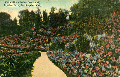 Walks Between Flowers at Elysian Park