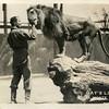 Gay's Lion Farm El Monte