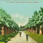 Palms at Eastlake Park
