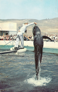 Bubbles the Pilot Whale