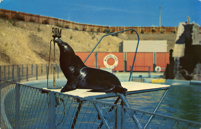 Educated Sea Lion