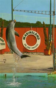 Dolphin Ball Grab