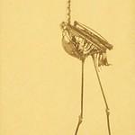 La Brea Stork