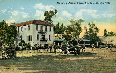 Ostrich Farm Land