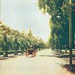 Palmetto Avenue