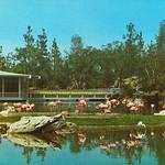 Flamingo Island